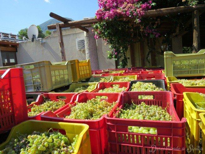 """Uvas da vinícola Virgona literalmente esperando por um lugar ao sol. Para a produção de Malvasia, as uvas precisam ser expostas ao sol até se tornaram """"apassitas"""". A Virgona, apesar de ser uma empresa familiar, já ganhou vários prêmios a nível nacional."""
